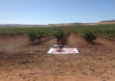 Revisión de viñedos en Cariñena